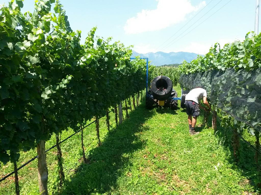 Realizzazione impianto d'irrigazione per vigneto a San Zenone degli Ezzelini TV