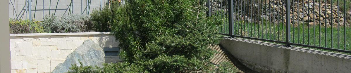 Immagine di un'aiuola con conifere