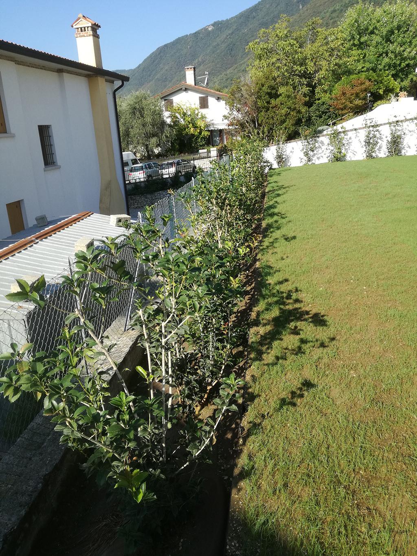 Immagine realizzazione giardino con piante grasse e mediterranee a Borso del Grappa