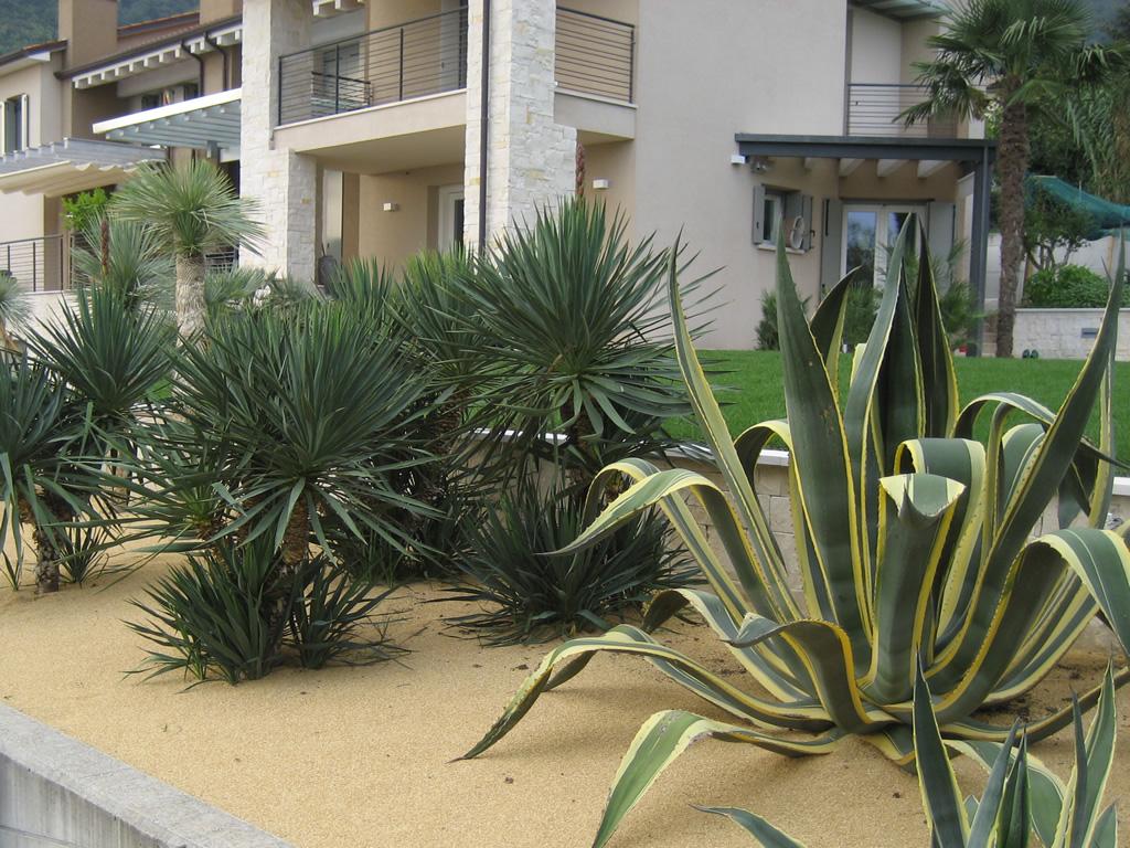 immagine preogetto giardino con piante socculente e mediterranee