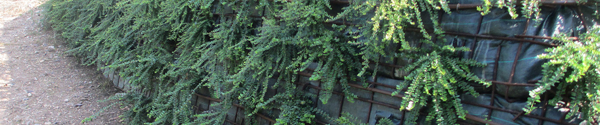 Immagine progetto giardino con terre armate