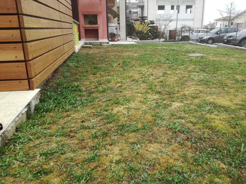 realizzazione giardino con prato a semina ad Asolo foto 1