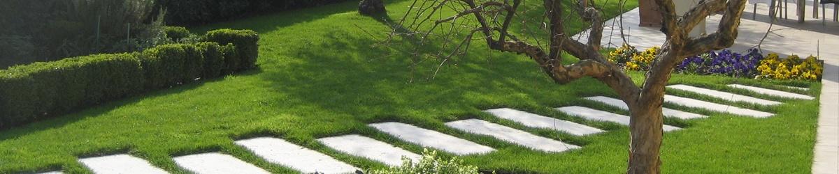 giardino privato con pavimentazione e ulivo