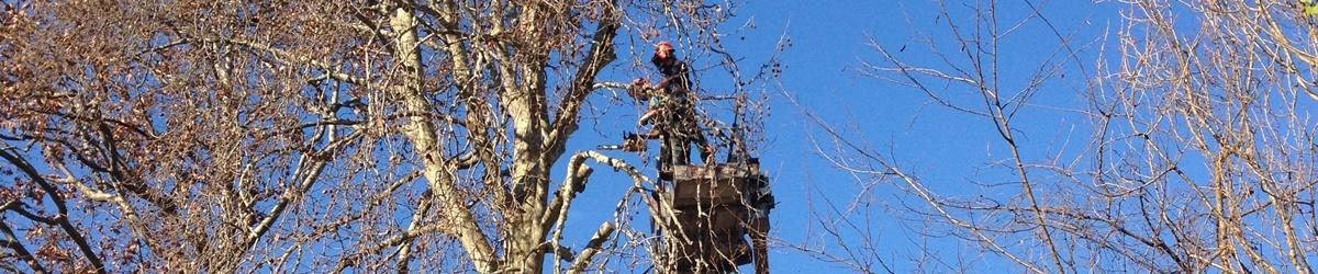 potatura di alberi ad alto fusto a Treviso, Asolo, Bassano del Grappa e Castelfranco Veneto