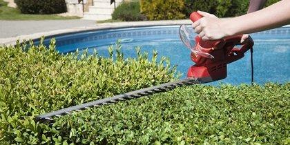 immagine potatura piante
