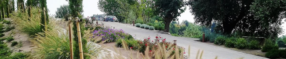realizzazione giardino privato con piante mediterranee