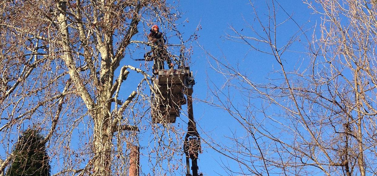 immagine manutenzione giardini e potatura di alberi ad alto fusto