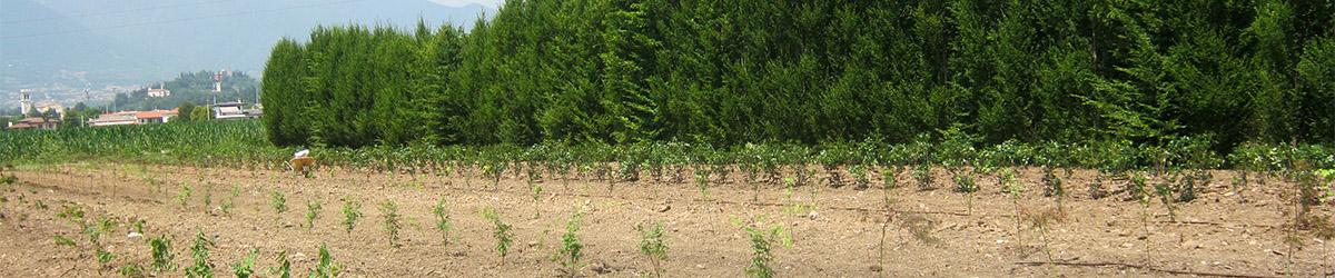 vivaio piante in campo, in vaso ed esemplari