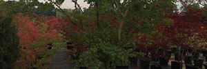immagine piante in contenitore ed esemplari