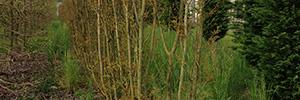 immagine piante in piena terra
